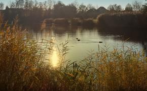 Картинка трава, птицы, туман, озеро, пруд, берег, утки, утро, домики, водоем