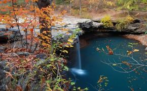 Картинка Nature, Water, Autumn, Wallpaper, Trees