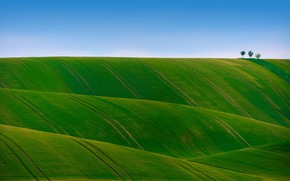 Картинка поле, небо, трава, деревья, холмы