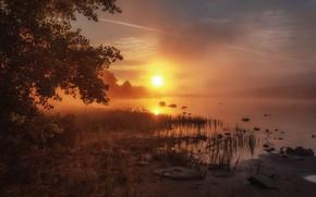 Картинка небо, трава, солнце, свет, ветки, туман, камни, дерево, рассвет, берег, листва, утро, золотой, водоем, туманное
