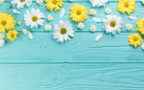 Картинка цветы, ромашки, желтые, white, белые, wood, blue, flowers, голубой фон, camomile