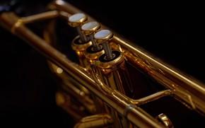 Картинка макро, музыка, труба