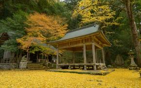 Картинка Природа, Осень, Япония, Лес, Листья, Храм