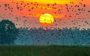 Картинка colors, sunset, sun, ducks, many