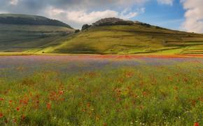 Картинка лето, свет, цветы, горы, холмы, маки, дома, поселение, васильки, маковое поле