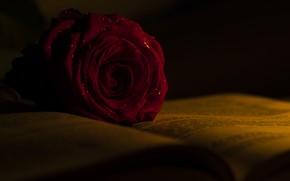 Картинка роза, бутон, книга