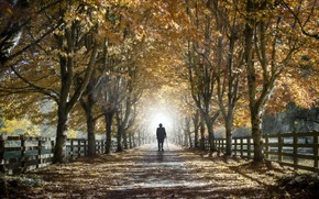 Картинка осень, жизнь, улица, человек
