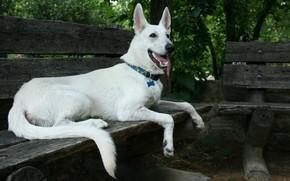 Картинка собака, лавка, белая
