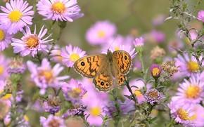 Картинка цветы, летнее настроение, бабочка. настроение, макро flowers природа