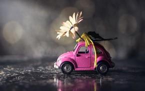 Картинка машина, цветок, игрушка