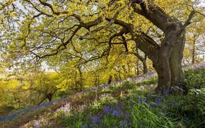 Картинка цветы, дерево, весна, луг