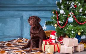 Картинка украшения, шары, елка, собака, Рождество, подарки, Новый год, снеговик, christmas, balls, dog, лабрадор ретривер, labrador …