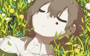 Картинка трава, божья коровка, мальчик, спит, книга