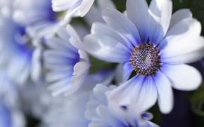 Картинка цветы, фон, размытость, клумба