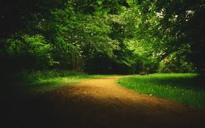 Картинка парк, аллея, тропинка, скамья