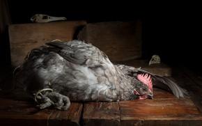Картинка птица, еда, курица