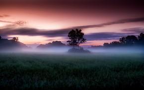 Картинка Небо, Облака, Поле, Туман, Деревья, Утро, Рассвет, Опушка