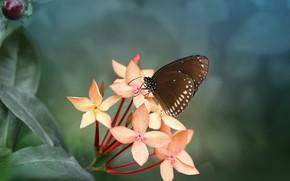 Картинка листья, макро, природа, бабочка, ветка, насекомое, цветки