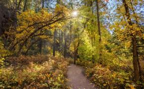 Картинка лес, солнце, деревья, тропинка, Arizona, Sedona, West Fork