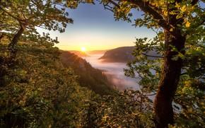 Картинка деревья, горы, туман, восход, рассвет, утро, Германия, Germany, дубы, Баден-Вюртемберг, Baden-Württemberg, Швабский Альб, Swabian Jura, …