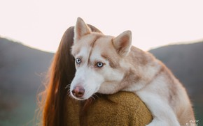 Картинка взгляд, морда, девушка, собака, голубые глаза, хаски, Ульяна Мизинова