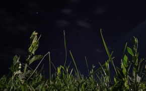 Картинка трава, ночь, Природа