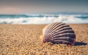 Картинка песок, море, макро, ракушка