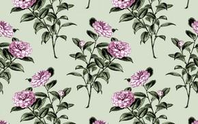 Картинка цветы, фон, обои, Flowers, винтаж, Wallpaper, Vintage, Camellia