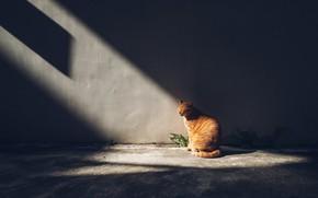 Картинка кошка, темный фон, лучи, свет, стена, рыжий, сидит, кот