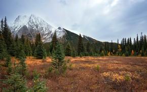 Картинка осень, лес, небо, трава, облака, деревья, горы, скалы, поляна