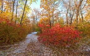 Картинка осень, листья, парк, сад