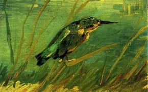 Картинка клюв, сорока, Винсент ван Гог, The Kingfisher