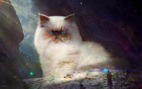 Картинка кот, люди, маг