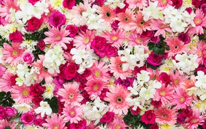 Картинка цветы, фон, розы, розовые, бутоны, хризантемы, pink, flowers, roses, bud