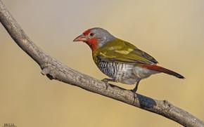 Картинка взгляд, природа, птица, ветка, зелёная, DUELL ©