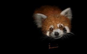 Картинка арт, красная панда, малышка, детская, Khalil Imami, Red panda