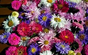 Картинка лето, цветы, Радуга, Астра