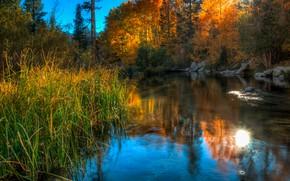Картинка осень, лес, трава, пейзаж, природа, пруд, отражение, камни