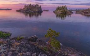 Картинка острова, деревья, пейзаж, природа, рассвет, утро, Ладожское озеро, Карелия, Ладога, Владимир Рябков, Шхеры
