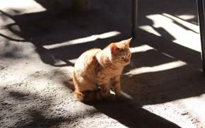 Картинка кошка, свет, котенок, малыш, рыжий, тени, котёнок, тротуар