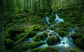 Картинка лес, вода, деревья, ручей, мох