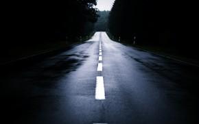 Картинка дорога, лес, туман, вечер