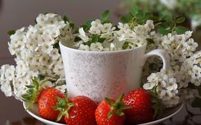 Картинка цветы, ягоды, клубника, чашка