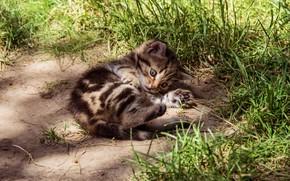 Картинка кошка, трава, взгляд, свет, природа, поза, котенок, серый, поляна, малыш, лежит, котёнок, полосатый, британский, шотландский