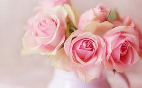 Картинка розы, букет, розовые, кувшин