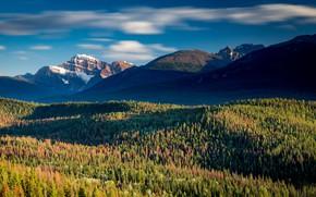 Картинка лес, горы, Канада, Альберта, Национальный парк Джа́спер