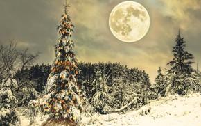 Картинка зима, ночь, праздник, луна, ёлка