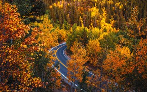 Картинка дорога, осень, лес, деревья, Колорадо, Colorado