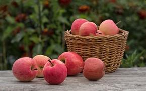 Картинка плоды, яблоки, корзина