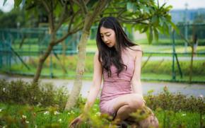 Картинка трава, девушка, милая, азиатка, сидит, боке